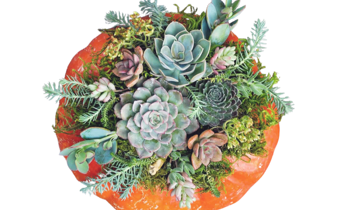 Pumpkin Centerpiece Raffle – Drawing October 23rd